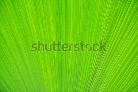 Texture of green leave for your background Stock photo © Elnur