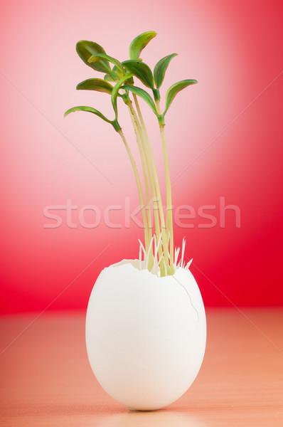Tojások zöld palánta új élet tavasz tojás Stock fotó © Elnur