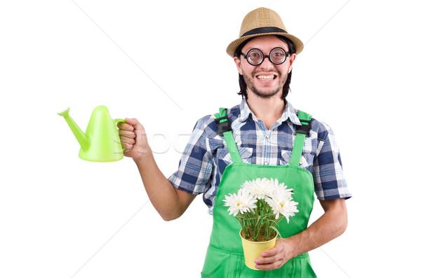 Foto stock: Jóvenes · funny · jardinero · tulipanes · regadera · aislado