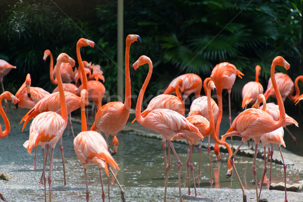 Flamingo birds in the pond Stock photo © Elnur