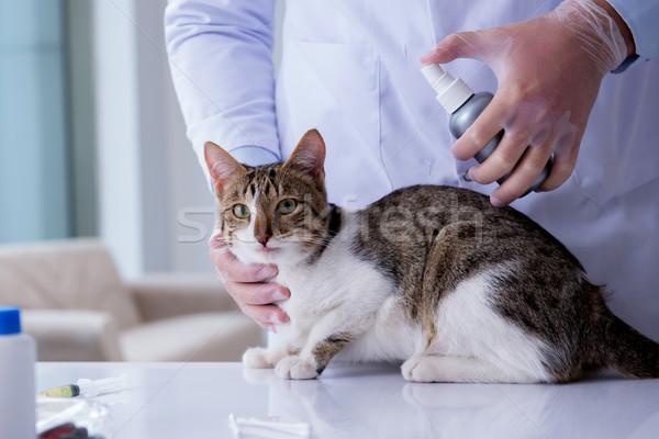кошки ветеринар регулярный проверить вверх врач Сток-фото © Elnur