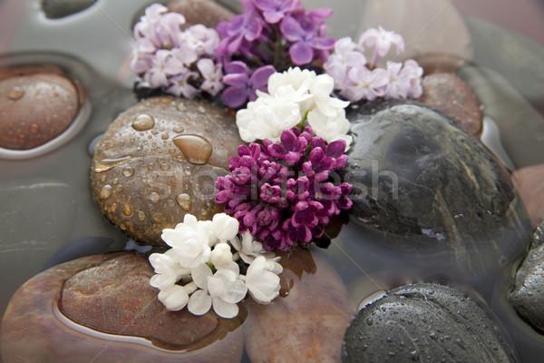 Rochas flores água tigela raso Foto stock © elvinstar