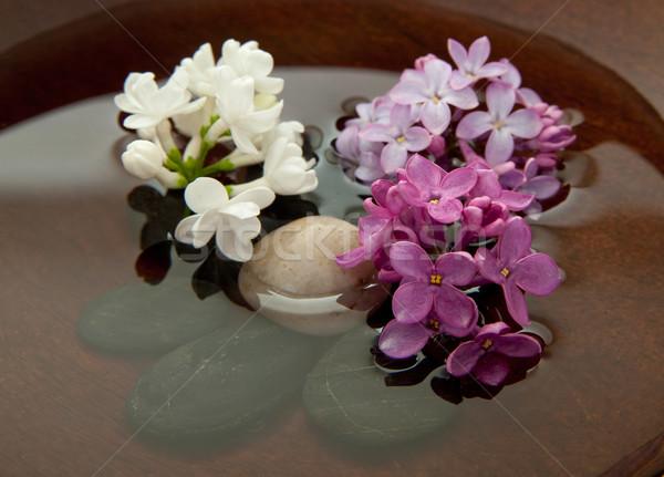 Сток-фото: пород · цветы · воды · сирень · чаши · цветок