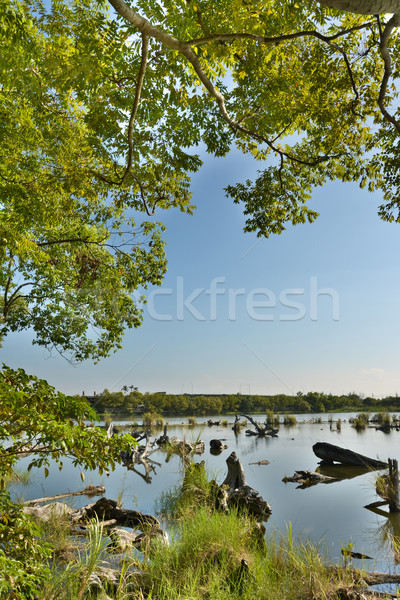 Göl manzara eski gölet atış ormancılık Stok fotoğraf © elwynn
