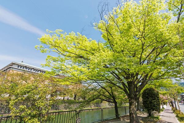 Zümrüt yeşil kiraz ağaçlar dere Stok fotoğraf © elwynn