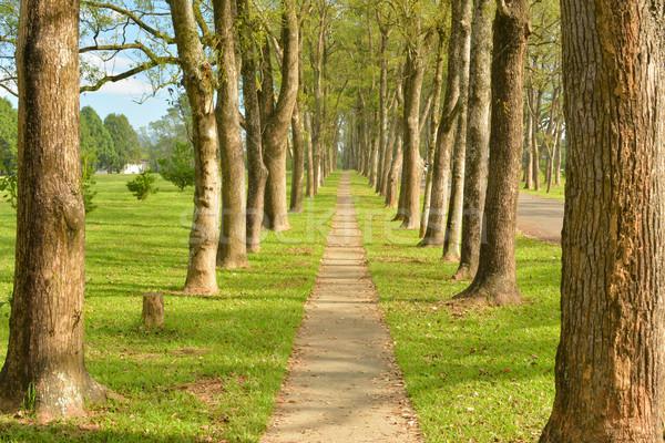 Walkway in Park Stock photo © elwynn