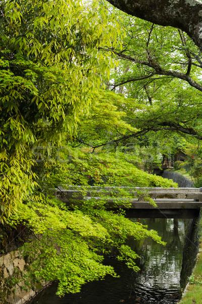 Növények megnőtt smaragd zöld juhar választék Stock fotó © elwynn