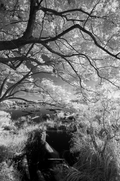 IR landscape Stock photo © elwynn