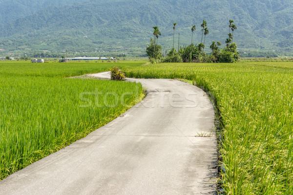 road across the paddy farm Stock photo © elwynn