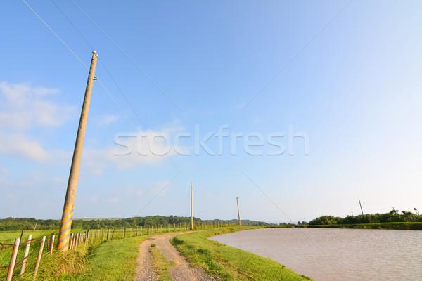 Vidéki út napos idő kék ég senki erdő természet Stock fotó © elwynn