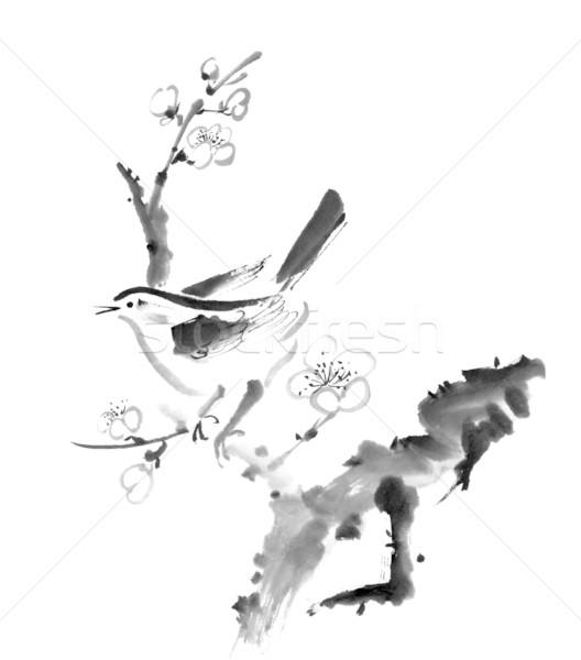 Prugna fiore cinese pittura uccello bianco Foto d'archivio © elwynn