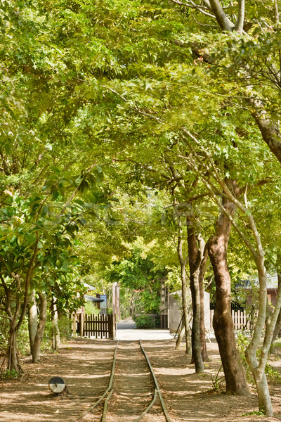 Floresta ferrovia tiro silvicultura cultura jardim Foto stock © elwynn