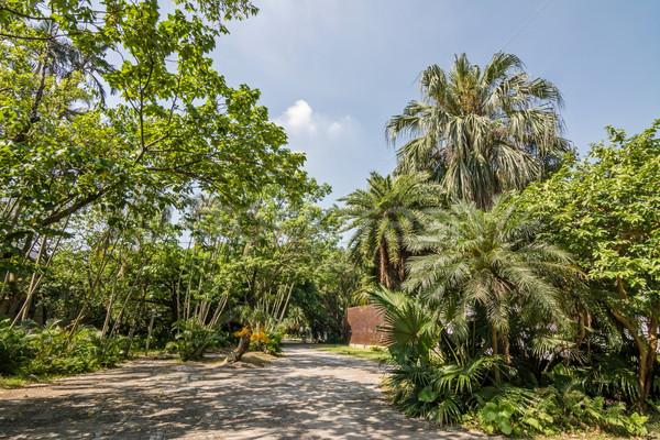 Cultural criador parque escritório árvore cidade Foto stock © elwynn