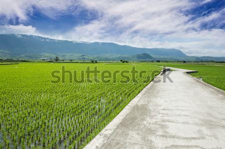 Rice farm in country Stock photo © elwynn