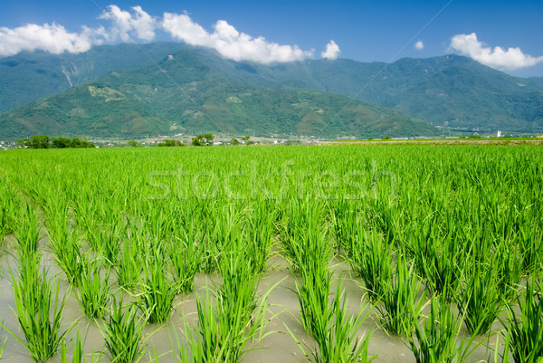 Asian beautiful farm with mountain far away Stock photo © elwynn