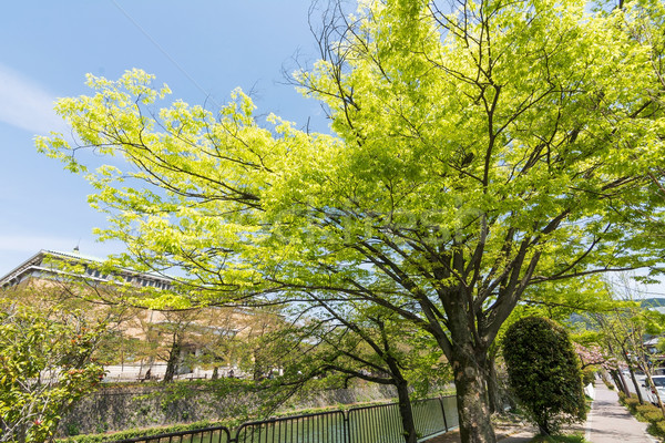 Smaragd zöld cseresznye fák folyam vmi mellett Stock fotó © elwynn