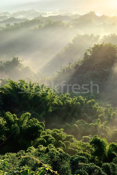 Sunlight with mist Stock photo © elwynn