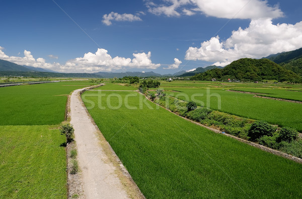 út vidék zöld farm kék ég Tajvan Stock fotó © elwynn