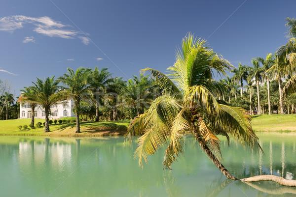 Roeping landschap tropische boom meer blauwe hemel Stockfoto © elwynn