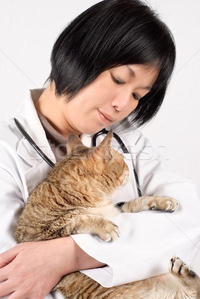 Amavelmente médico animal de estimação gato olhando Foto stock © elwynn
