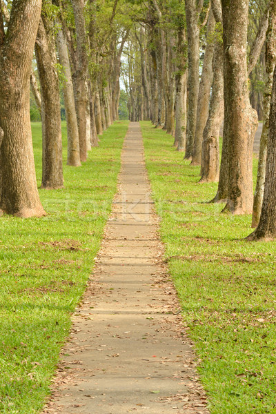 Stock photo: Walkway in Park