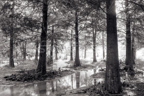 Landscape of forest Stock photo © elwynn
