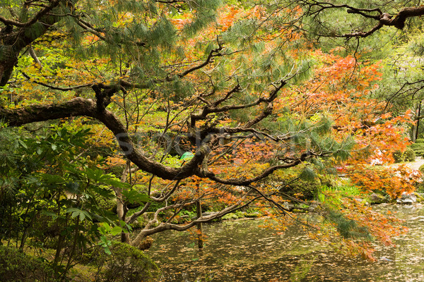 Red maples and pines planted on the shore. Stock photo © elwynn
