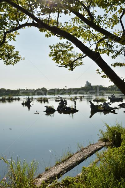 Göl ahşap gölet atış ormancılık kültür Stok fotoğraf © elwynn