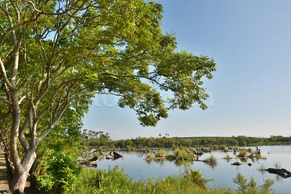 湖 風景 古い 池 ショット 林業 ストックフォト © elwynn