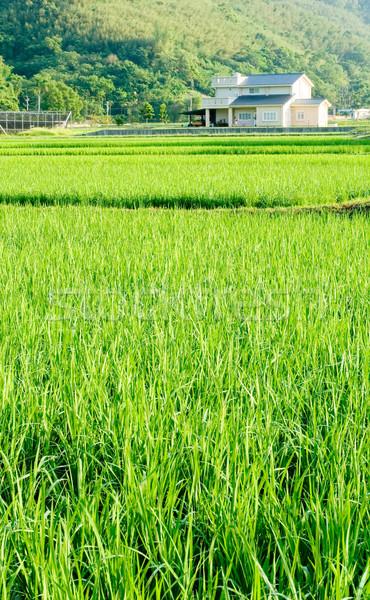 風景 緑 ファーム 小 村 家 ストックフォト © elwynn