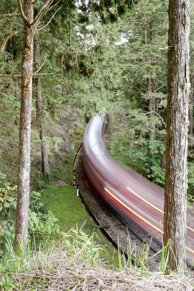Forest railway Stock photo © elwynn