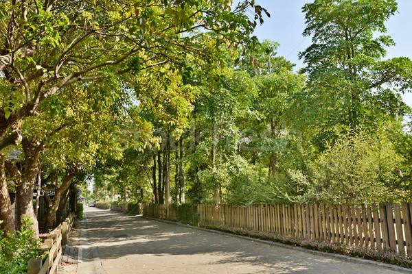 Utca út fa lövés erdőgazdaság kultúra Stock fotó © elwynn