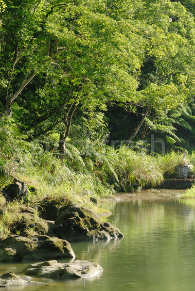 peaceful forest with river Stock photo © elwynn