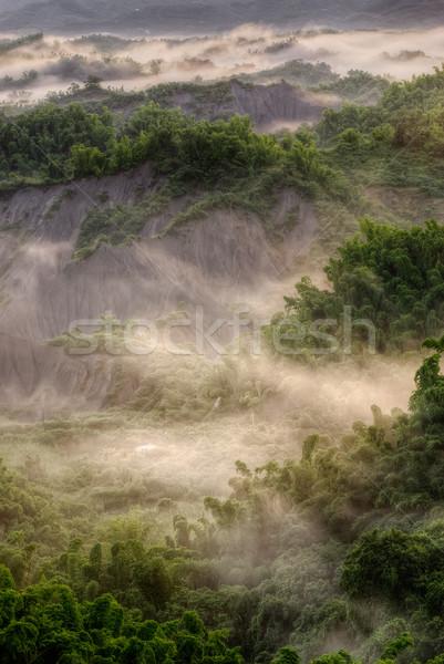 Yeşil orman buğu güzel manzara doğa Stok fotoğraf © elwynn