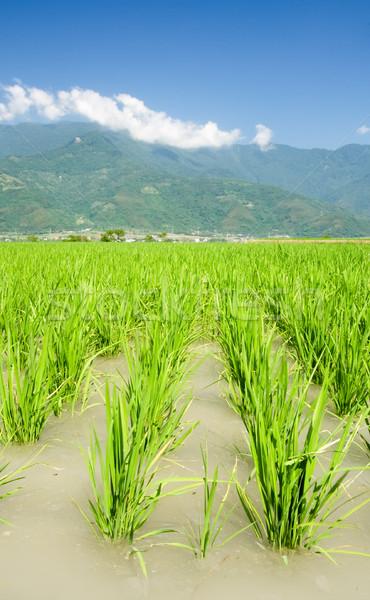 Asian beautiful farm with mountain far away Stock photo © elwynn