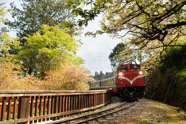 Forest train Stock photo © elwynn