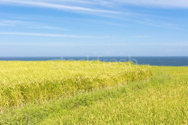 Paddy terrace farm near the sea Stock photo © elwynn