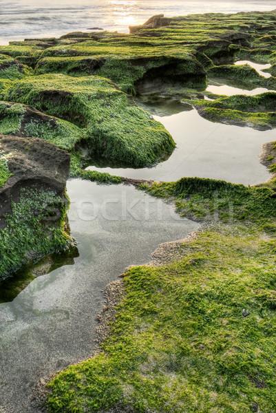 Green coas water Stock photo © elwynn