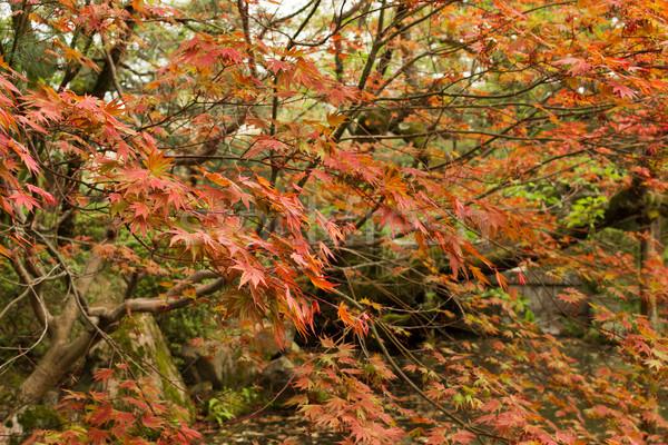 Foto stock: Vermelho · costa · japonês · jardim · paisagem · projeto