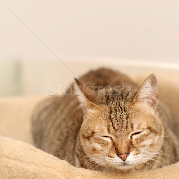 Félálom macska vicces föld szoba ház Stock fotó © elwynn