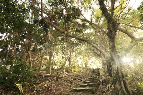 Bos trap boom weg Stockfoto © elwynn
