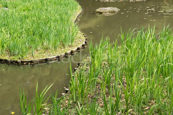 The green grass gardening in the pond. Stock photo © elwynn