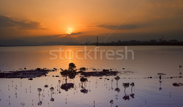 Dramatic cityscape of sunrise with kandelia candel Stock photo © elwynn