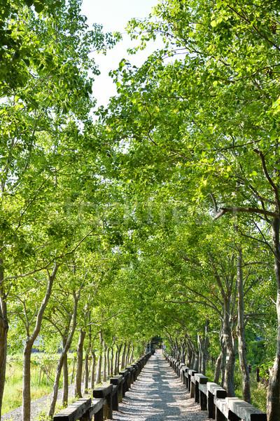 árvore rural tiro silvicultura cultura Foto stock © elwynn