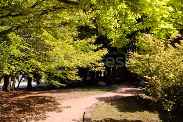 út zöld juhar fák levelek nappal Stock fotó © elwynn