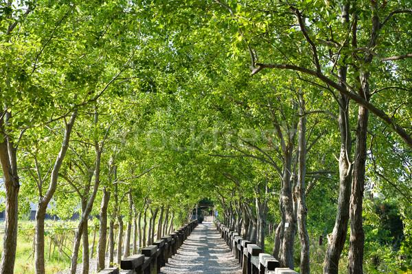 Ağaç kırsal atış ormancılık kültür Stok fotoğraf © elwynn