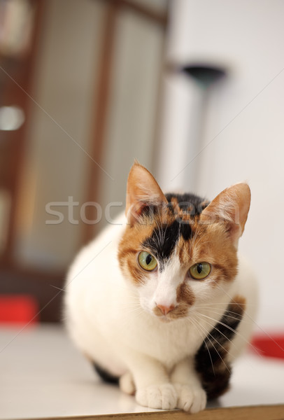 Curious and cut cat Stock photo © elwynn
