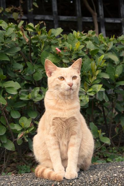 city cat Stock photo © elwynn