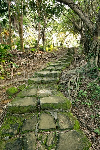 Forest pathway with stairs Stock photo © elwynn