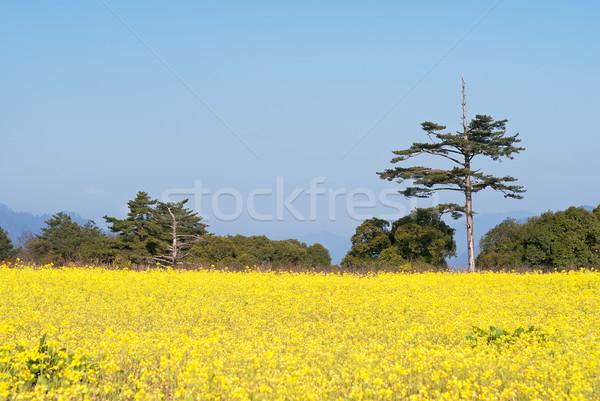 Nemi erőszak virágok farm citromsárga zöld fa kék ég Stock fotó © elwynn